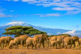 In Tanzania, a caccia di scatti fotografici e atmosfere selvagge nei più bei parchi faunistici dell'intera Africa