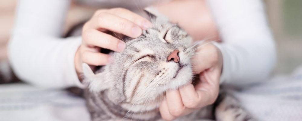 accarezzare gatti