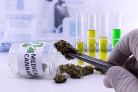"""Fumare e testare marijuana, in Canada un lavoro da """"sballo"""""""